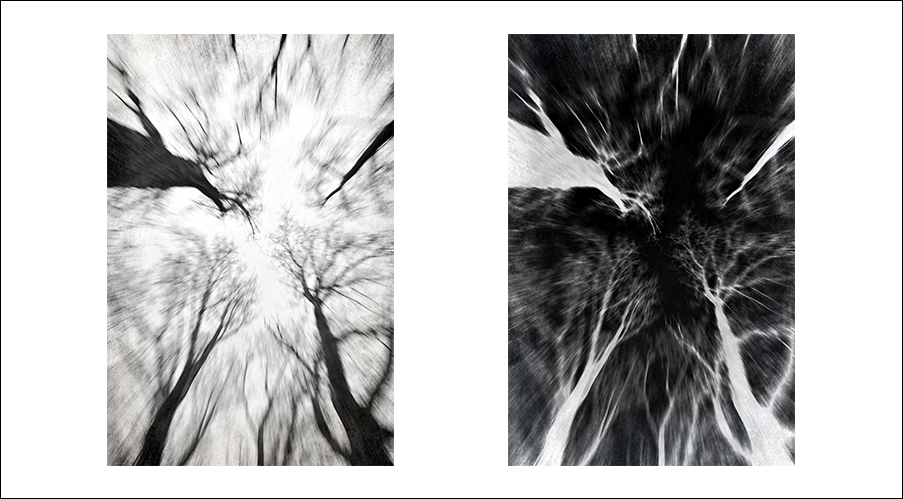 De Bomen